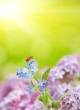 Small ladybug Stock Images