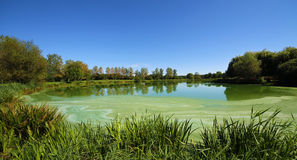 Small lake. A small lake among the green grass and trees Stock Photos