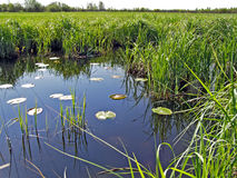 Small lake Royalty Free Stock Images