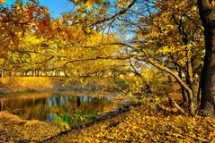 A small lake in the autumn forest. A small lake in the yellow autumn forest Royalty Free Stock Photography