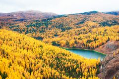 Small lake in autumn forest. Altai, Siberia, Russia. Small lake in autumn forest. Altai Republic, Siberia, Russia royalty free stock photo
