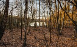Small lake behind the bare trees stock photography