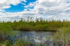 Small lake on bog Royalty Free Stock Image