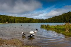 Small lake called Sao Bras. Surrounded by green forest, located stock photos