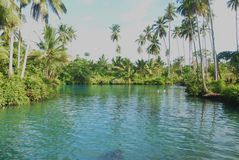 Small lake. With coconut trees Stock Photo