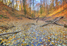 Small lake covered with yellow leaves in the forest Royalty Free Stock Images