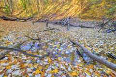 Small lake covered with yellow leaves in the forest Stock Photo