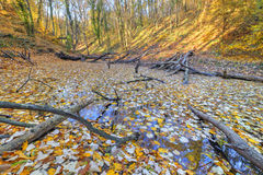 Small lake covered with yellow leaves in the forest Royalty Free Stock Photography