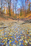 Small lake covered with yellow leaves in the forest Stock Images