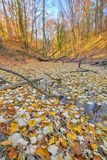 Small lake covered with yellow leaves in the forest Stock Photography