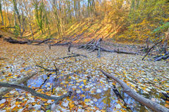 Small lake covered with yellow leaves in the forest Royalty Free Stock Photo