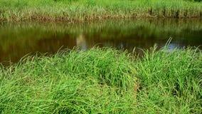 Small lake. stock footage