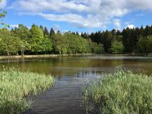 Small lake in the forest stock photo
