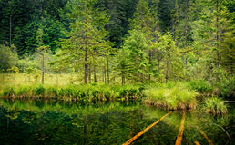 Small lake in forest Royalty Free Stock Images