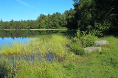 Small lake in forest Royalty Free Stock Image