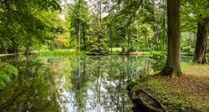 Small lake in a forest park royalty free stock image