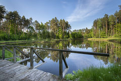 Small lake in the forest Stock Images