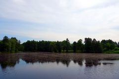 Lake, forest and sky Stock Photo