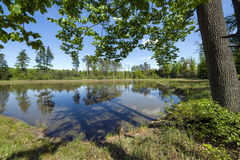 Small lake in the forest, Southern Poland Royalty Free Stock Photo
