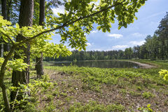 Small lake in the forest Stock Photography