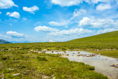 Small lake and green grass Royalty Free Stock Photo