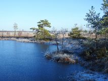 Beautiful small lake, trees and plants in Aukstumalos swamp, Lithuania stock photography