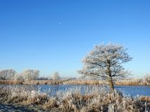 Small lake in ice and snowy trees, Lithuania stock image