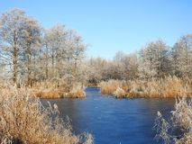 Small lake in ice and snowy trees, Lithuania royalty free stock photography
