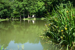 Small lake with island in park Nasice, Croatia.  Stock Photos