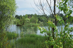 Small lake with an island in Russia. Small pond with a small island located in there, trees and grass around Royalty Free Stock Photos