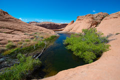 Small lake oasis in the desert Escalante National Stock Images