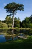 Small Lake - Pine Tree - Small Jetty Stock Photography