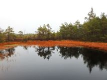 Beautiful small lake and plants in Aukstumalos swamp, Lithuania royalty free stock photography