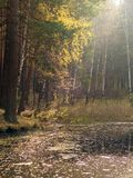 A small lake with pines and birches on the shore in the autumn forest stock photo