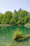 Small lake in the Plitvice national park Royalty Free Stock Photos