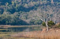 Ranthambore National Park, India. Small lake in Ranthambore National Park in Rajasthan, India stock image
