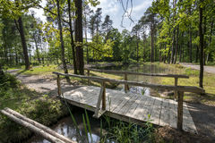 Small lake in recreation area in the forest Royalty Free Stock Images