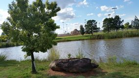 Plum lake with oak tree Stock Images