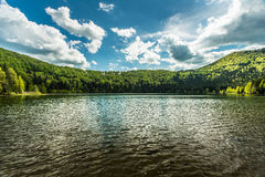 Small lake surrounded with pine forest Royalty Free Stock Images