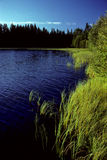Small lake in Sweden Royalty Free Stock Image