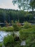 A small lake with thick grass and forest on the shores royalty free stock photography