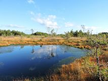 Small lake and trees in Aukstumalos swamp, Lithuania Stock Photos