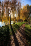 Small Lake with Trees in Autumn Stock Image