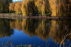 Small Lake with Trees in Autumn Stock Photography