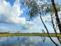 Small lake, trees and beautiful cloudy sky in swamp, Lithuania stock image