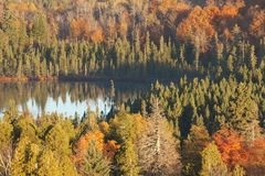 Small lake among trees with fall color in northern Minnesota Stock Images