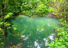 Small lake in tropical thicket Stock Photography