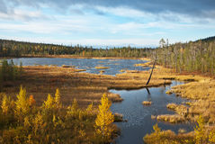Small lake on the tundra Stock Images
