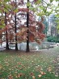Small Lake. In Vrnjacka Banja, Serbia Royalty Free Stock Images
