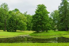 Small lake in the forest. Green trees in the park with lake. royalty free stock images